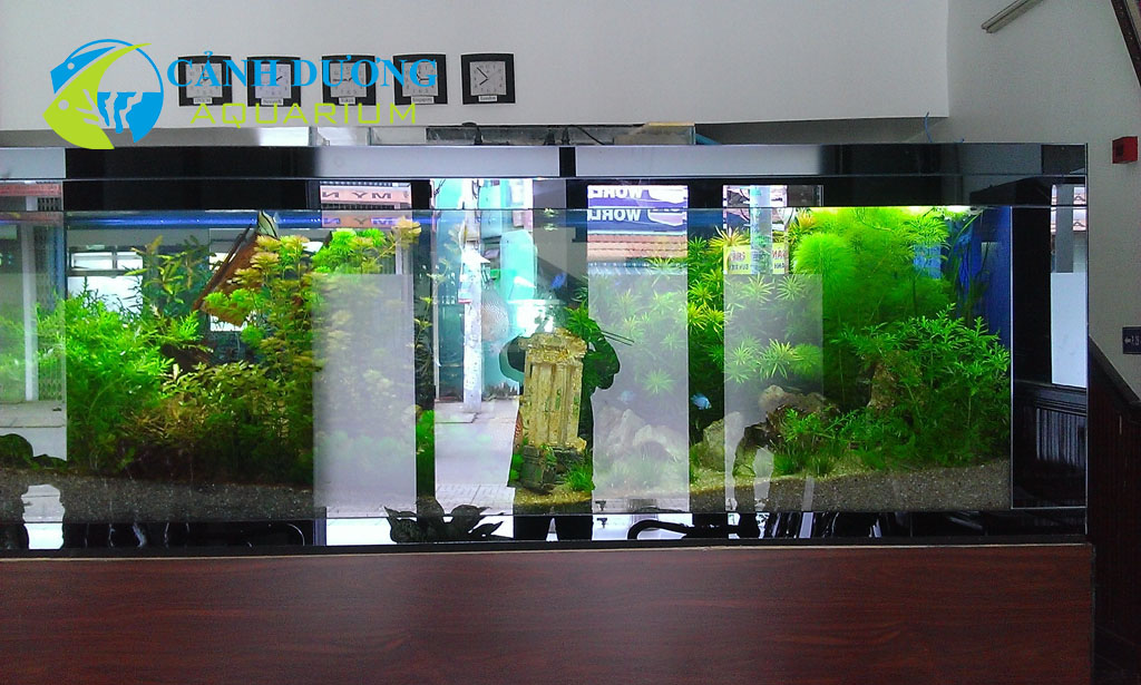Bể thủy sinh (Hồ nẹp thủy đen mài)