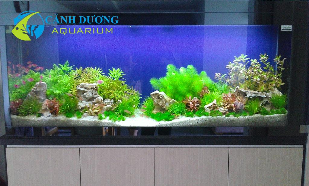 Mẫu tủ hồ thủy sinh giá tốt mới 2014